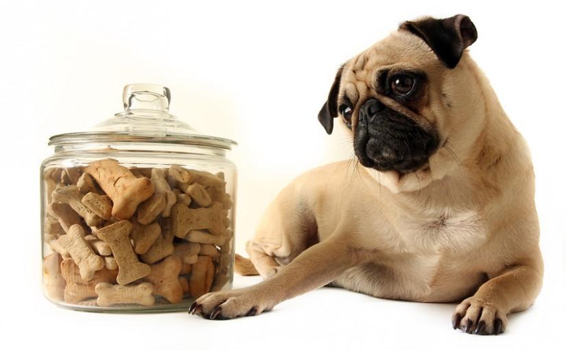 Dog-food-danger