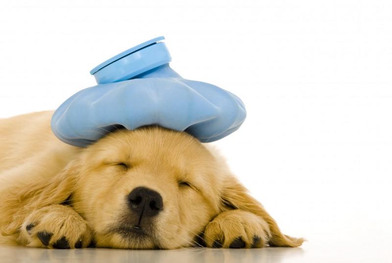 犬と副作用