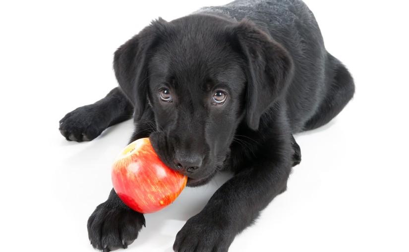 犬が食べてもOK!<span>愛犬が喜ぶ食材リスト</span><span>【くだもの・オイル編】</span>
