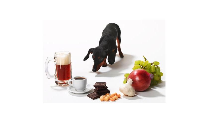これだけは押さえておきたい!<span>「犬のためのNG食材辞典」</span><span>食べさせると危険なもの、注意が必要なもの</span>