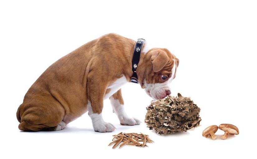 犬が食べてもOK!<span>愛犬が喜ぶ食材リスト</span><span>【きのこ・海藻編】</span>