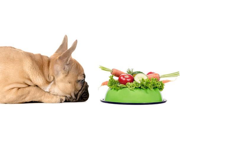 犬が食べてもOK!<span>愛犬が喜ぶ食材リスト</span><span>【野菜編】</span>