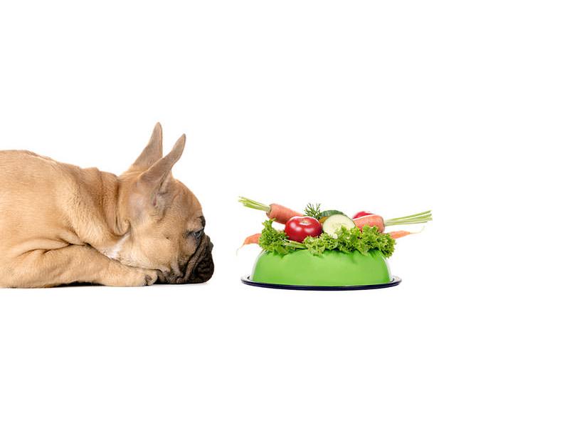 犬の食材/アイキャッチ野菜