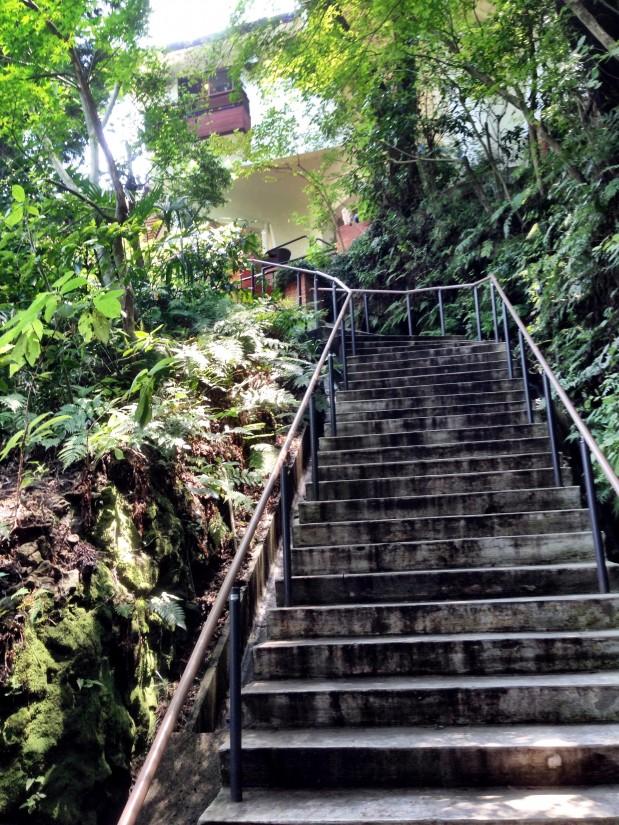 樹ガーデン/天空への階段2