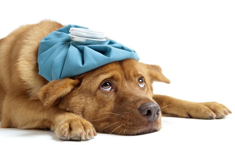 風通しが良い室内で愛犬が<span>″熱中症″になる理由と対策</span>